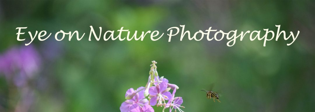 Eye on Nature Photography
